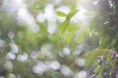 Η κινηματογράφηση σε πρώτο πλάνο εστίασης σημείων, πράσινα φύλλα θόλωσε bokeh και δίκαιος φακός ως υπόβαθρο στο φυσικό κήπο στην  στοκ φωτογραφίες