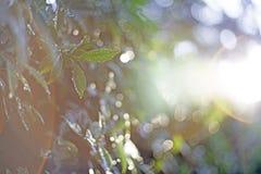 Η κινηματογράφηση σε πρώτο πλάνο εστίασης σημείων, πράσινα φύλλα θόλωσε bokeh και δίκαιος φακός καθώς το υπόβαθρο στο φυσικό κήπο στοκ εικόνα με δικαίωμα ελεύθερης χρήσης