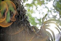 Η κινηματογράφηση σε πρώτο πλάνο εστίασης σημείων, φύλλα ορχιδεών, πράσινα φύλλα θόλωσε bokeh και δίκαιος φακός ως υπόβαθρο στο φ στοκ φωτογραφία