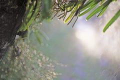 Η κινηματογράφηση σε πρώτο πλάνο εστίασης σημείων, φύλλα ορχιδεών, πράσινα φύλλα θόλωσε bokeh και δίκαιος φακός ως υπόβαθρο στο φ στοκ εικόνα με δικαίωμα ελεύθερης χρήσης