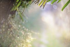 Η κινηματογράφηση σε πρώτο πλάνο εστίασης σημείων, φύλλα ορχιδεών, πράσινα φύλλα θόλωσε bokeh και δίκαιος φακός ως υπόβαθρο στο φ στοκ φωτογραφίες με δικαίωμα ελεύθερης χρήσης