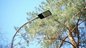 Η κινηματογράφηση σε πρώτο πλάνο, στα πλαίσια του ουρανού και των κορυφών των δέντρων, ένας μεγάλος λαμπτήρας οδών κρεμά Δάσος πε απόθεμα βίντεο