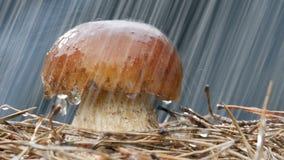 Η κινηματογράφηση σε πρώτο πλάνο της καφετιάς ΚΑΠ ξεφυτρώνει πτώση βροχής ποτίσματος φιλμ μικρού μήκους