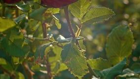 Η κινηματογράφηση σε πρώτο πλάνο του κήπου αυξήθηκε αναδρομικά φωτισμένος σε σε αργή κίνηση απόθεμα βίντεο