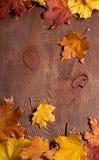 η κινηματογράφηση σε πρώτο πλάνο ανασκόπησης φθινοπώρου χρωματίζει το φύλλο κισσών πορτοκαλί Στοκ φωτογραφίες με δικαίωμα ελεύθερης χρήσης
