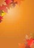 η κινηματογράφηση σε πρώτο πλάνο ανασκόπησης φθινοπώρου χρωματίζει το φύλλο κισσών πορτοκαλί Στοκ φωτογραφία με δικαίωμα ελεύθερης χρήσης