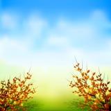 η κινηματογράφηση σε πρώτο πλάνο ανασκόπησης φθινοπώρου χρωματίζει το φύλλο κισσών πορτοκαλί απεικόνιση αποθεμάτων