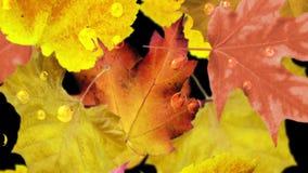 η κινηματογράφηση σε πρώτο πλάνο ανασκόπησης φθινοπώρου χρωματίζει το φύλλο κισσών πορτοκαλί βρόχος απεικόνιση αποθεμάτων