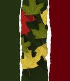 η κινηματογράφηση σε πρώτο πλάνο ανασκόπησης φθινοπώρου χρωματίζει το φύλλο κισσών πορτοκαλί Στοκ εικόνα με δικαίωμα ελεύθερης χρήσης