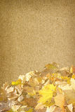 η κινηματογράφηση σε πρώτο πλάνο ανασκόπησης φθινοπώρου χρωματίζει το φύλλο κισσών πορτοκαλί Στοκ Εικόνες