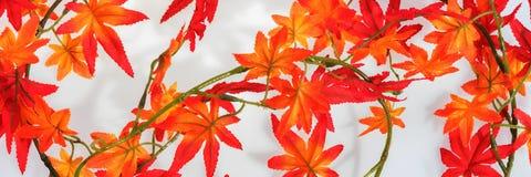 η κινηματογράφηση σε πρώτο πλάνο ανασκόπησης φθινοπώρου χρωματίζει το φύλλο κισσών πορτοκαλί το φθινόπωρο αφήνει κόκκιν& Στοκ Φωτογραφία