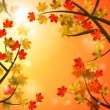 η κινηματογράφηση σε πρώτο πλάνο ανασκόπησης φθινοπώρου χρωματίζει το φύλλο κισσών πορτοκαλί ελεύθερη απεικόνιση δικαιώματος