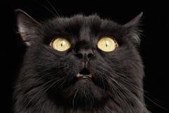 Η κινηματογράφηση σε πρώτο πλάνο εξέπληξε το μαύρο πρόσωπο γατών με τα κίτρινα μάτια που ανοίγει το στόμα στοκ εικόνες με δικαίωμα ελεύθερης χρήσης
