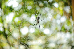 Η κινηματογράφηση σε πρώτο πλάνο Ιστού αραχνών (ιστός αράχνης) Στοκ Φωτογραφία