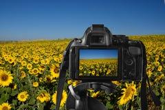 Η κινηματογράφηση σε πρώτο πλάνο μιας ψηφιακής κάμερα με έναν ζωηρόχρωμο φαντάζεται στη ζωντανός-άποψη Στοκ Εικόνες
