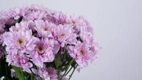Η κινηματογράφηση σε πρώτο πλάνο, λουλούδια, ανθοδέσμη, περιστροφή στο άσπρο υπόβαθρο, floral σύνθεση αποτελείται από το πορφυρό  απόθεμα βίντεο