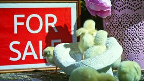 Η κινηματογράφηση σε πρώτο πλάνο, στο καπέλο κάθεται ένα μικρό κοτόπουλο, ένα πιάτο με μια επιγραφή, για την πώληση φιλμ μικρού μήκους