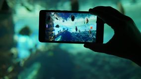 Η κινητή συσκευή πυροβολεί ένα ενυδρείο με την ποικιλία των διαφορετικών ψαριών στην κινηματογράφηση σε πρώτο πλάνο βιντεοκάμερων απόθεμα βίντεο