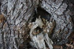 Η κοιλότητα ενός παλαιού δέντρου στοκ εικόνα