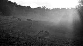 Η κοιλάδα Στοκ Εικόνες