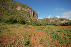 Η κοιλάδα Vinales στην Κούβα στοκ εικόνες