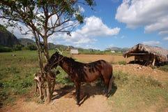 Η κοιλάδα Vinales στην Κούβα στοκ φωτογραφίες