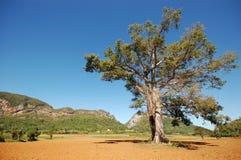 Η κοιλάδα Vinales στην Κούβα στοκ εικόνα
