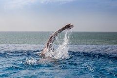 Η κολύμβηση γυναικών σέρνεται σε μια λίμνη με την ωκεάνια άποψη και το μπλε ουρανό Στοκ εικόνα με δικαίωμα ελεύθερης χρήσης