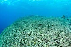Η κοραλλιογενής ύφαλος έχει καταστραφεί εντελώς Στοκ Φωτογραφία