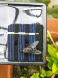 Η κορυφή κάτω από την άποψη OM λίγο ηλιακό πλαίσιο με τη μεγάλη μύγα, κλείνει επάνω στοκ εικόνες