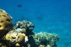 Η κορυφογραμμή της κοραλλιογενούς υφάλου στη θάλασσα στοκ εικόνες