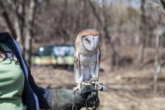 Η κουκουβάγια κάθεται στον άνθρωπο παραδίδει το ζωολογικό κήπο Στοκ Φωτογραφία