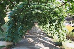 η κολοκύθα, κολοκύθα Calabash, άνθισε την κολοκύθα, τα φρούτα και τα δέντρα στο GA Στοκ Εικόνα