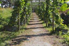 η κολοκύθα, κολοκύθα Calabash, άνθισε την κολοκύθα, τα φρούτα και τα δέντρα στο GA Στοκ φωτογραφίες με δικαίωμα ελεύθερης χρήσης