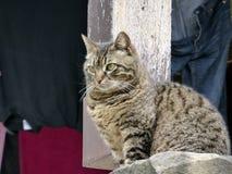 Η Κροατία, Κροατία, βόμβος, η μικρότερη πόλη στον κόσμο, μια γάτα μια εσωτερική γάτα παρατηρεί Στοκ Εικόνες