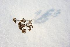 η κρούστα 2 υπογραμμίζει την παγωμένη σύσταση επιφάνειας φωτός του ήλιου χιονιού προτύπων λιμνών φυσική λεπτά Στοκ Φωτογραφίες