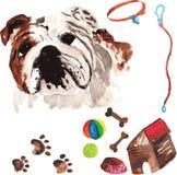 Η κτηνιατρική εξάρτηση που περιλαμβάνουν το αγγλικό μπουλντόγκ και τα εξαρτήματα για Στοκ Εικόνες