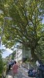 Η κυβέρνηση σκοτώνει το 100χρονο δέντρο Στοκ Εικόνες
