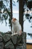 Η κόκκινη γάτα κάθεται σε ένα υπόβαθρο της θάλασσας Στοκ εικόνα με δικαίωμα ελεύθερης χρήσης