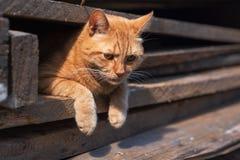 Η κόκκινη γάτα με το α το βλέμμα στοκ φωτογραφία με δικαίωμα ελεύθερης χρήσης