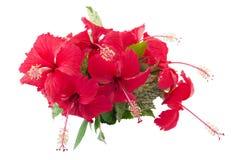 Η κόκκινη «Κίνα αυξήθηκε» λουλούδια Στοκ εικόνες με δικαίωμα ελεύθερης χρήσης