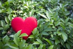 Η κόκκινη καρδιά σε πράσινο βγάζει φύλλα Στοκ Φωτογραφία