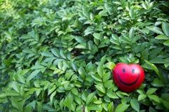 Η κόκκινη καρδιά σε πράσινο βγάζει φύλλα Στοκ Εικόνες