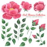 Η κόκκινη συλλογή watercolor λουλουδιών υπόβαθρο, χέρι που σύρεται στο άσπρο για τη ευχετήρια κάρτα, γαμήλια κάρτα, περιπτώσεις σ Στοκ φωτογραφία με δικαίωμα ελεύθερης χρήσης