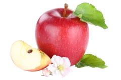 Η κόκκινη φέτα φρούτων της Apple τεμάχισε το άνθος που απομονώθηκε στο λευκό Στοκ φωτογραφίες με δικαίωμα ελεύθερης χρήσης