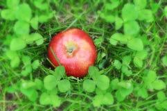 Η κόκκινη Apple στην πράσινη χλόη τριφυλλιού θαμπάδων Στοκ φωτογραφίες με δικαίωμα ελεύθερης χρήσης