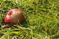 Η κόκκινη Apple στο έδαφος Στοκ Φωτογραφίες