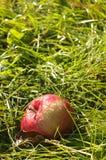Η κόκκινη Apple στο έδαφος Στοκ φωτογραφίες με δικαίωμα ελεύθερης χρήσης