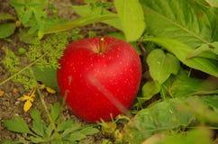 Η κόκκινη Apple στο έδαφος Στοκ εικόνες με δικαίωμα ελεύθερης χρήσης