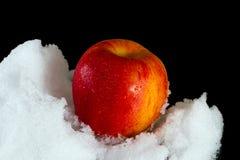 Η κόκκινη Apple στο χιόνι Στοκ εικόνες με δικαίωμα ελεύθερης χρήσης
